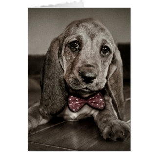 Sepia Basset Hound Puppy Feel Better Soon Card