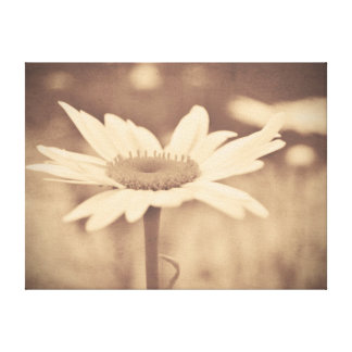 Sepia Daisy Stretched Canvas Print