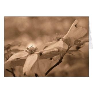 Sepia Dogwood Flower Photography Card