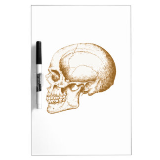 Sepia Human Skull Dry Erase Board