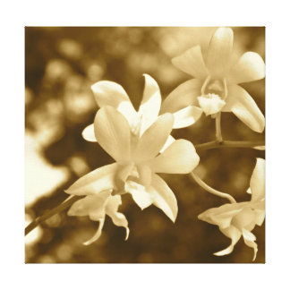 Sepia Orchids Canvas Print
