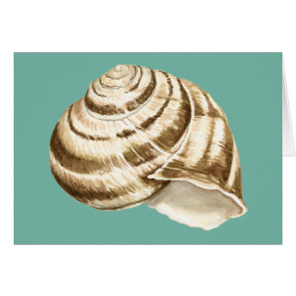 Sepia Striped Shell on Teal Greeting Card