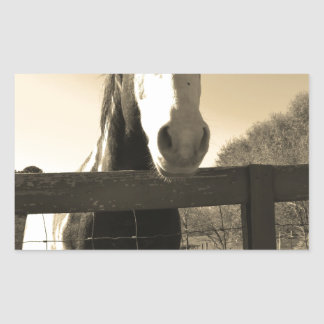 Sepia Tone Horse Rectangular Stickers