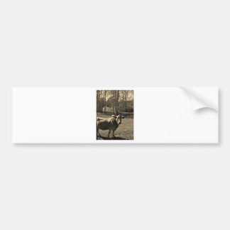 Sepia Tone  Photo of  Brown Cow Bumper Sticker