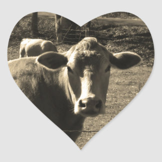 Sepia Tone  Photo of  Brown Cow Sticker