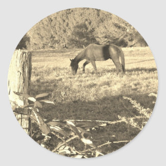 Sepia Tone  Photo of  brown Horse Stickers