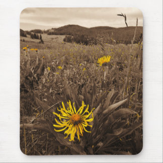 Sepia tone Yellow wildflowers Mousepad