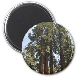 Sequioa National Park 6 Cm Round Magnet