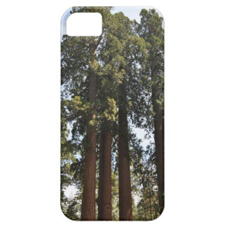 Sequioa National Park iPhone 5 Cases