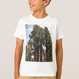 Sequioa National Park T-Shirt