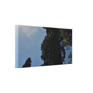 Sequoia. Canvas Print