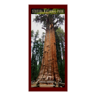 Sequoia General Sherman-Poster Poster