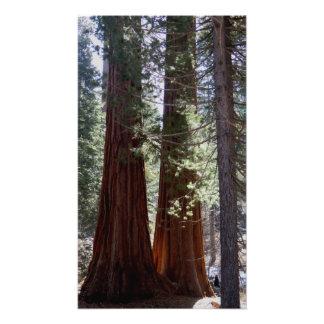 Sequoia/Kings Canyon Poster Photo