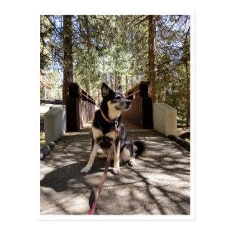 Sequoia National Park: Dog Days Postcard