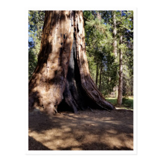 Sequoia National Park: Dog Days Postcard