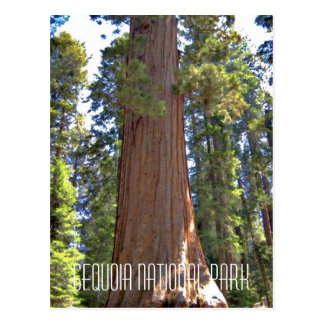 Sequoia National Park Postcard