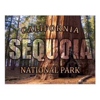 Sequoia National Park Postcards
