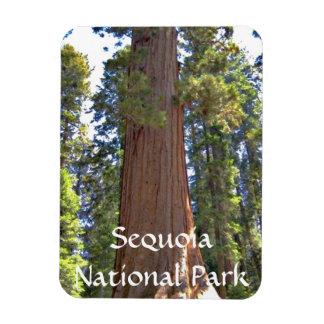 Sequoia National Park Rectangular Photo Magnet