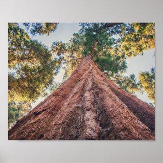 Sequoia Shrine | Poster