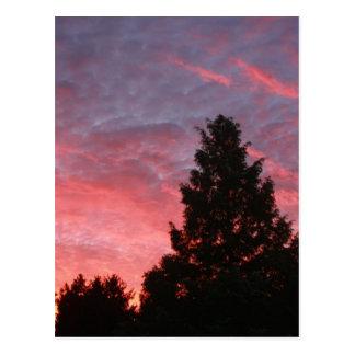 Sequoia Sunrise Postcard