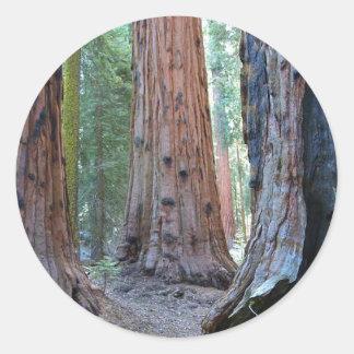 Sequoias Tree Forests Classic Round Sticker