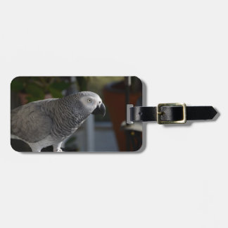 Serene African Grey Parrot Tags For Luggage