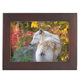 Serene Autumn Wolf Keepsake Box
