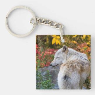 Serene Autumn Wolf Key Ring