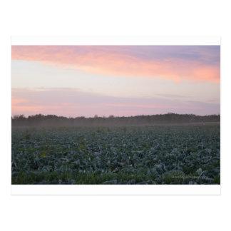 Serene Country Postcard