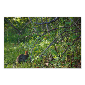 Serene Rabbit Photo Print
