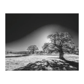 Serene Sun In The Meadow Black And White Canvas Print