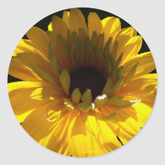 Serene Sunflower Classic Round Sticker