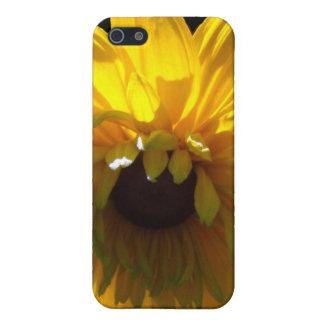 Serene Sunflower iPhone 5/5S Covers