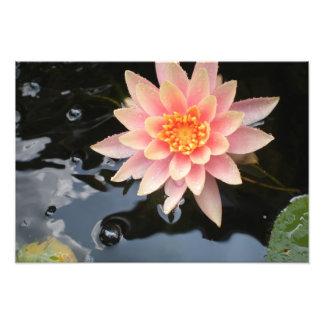 Serene Water Lily~print Photo Print