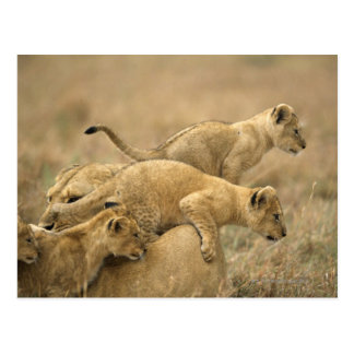 Serengeti National Park, Tanzania 2 Postcard