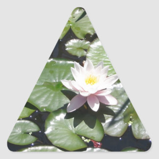 Series water lily