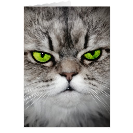 Serious cat with green eyes greeting cards