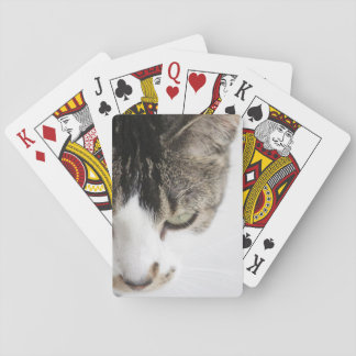 Serious grey and white cat playing cards