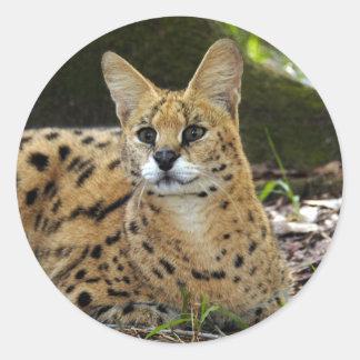 serval 015 round sticker