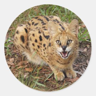 serval 044 round sticker