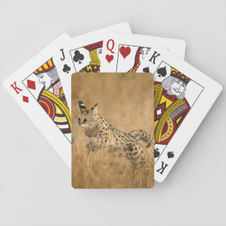 Serval (Leptailurus Serval) Jumping Playing Cards