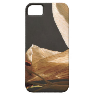 set sails case for the iPhone 5