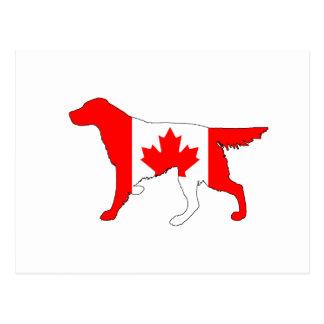 Setter Canada Postcard