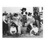 Seven rodeo cowgirls jokingly posing with a donkey postcard