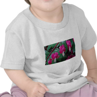Several flowers of bleeding heart plant and water t shirts