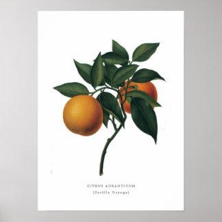 Seville Orange Poster