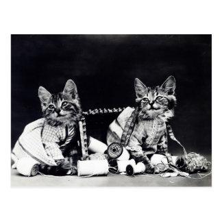 Sewing Kitties Vintage Black and White Postcard