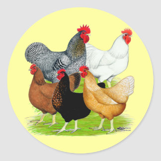 Sex-linked Chickens Quintet Classic Round Sticker