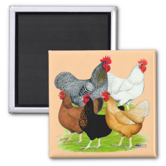 Sex-linked Chickens Quintet Square Magnet