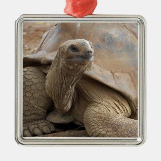 Seychelle Aldabran land tortoise Silver-Colored Square Decoration